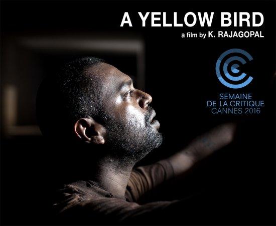 A Yellow Bird selected at Critic's Week ! 1